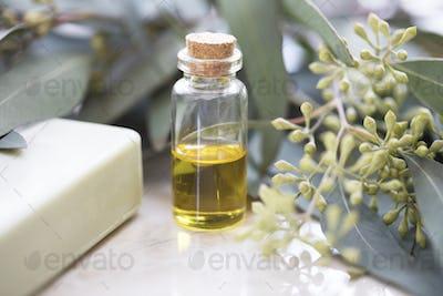 Eucalyptus Oil in Bottle
