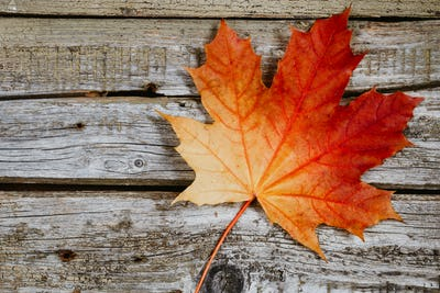 Maple leaf over rustic wooden background. The concept of fall and november.