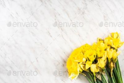 Garden fresh daffodils on marble table