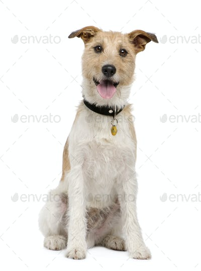 Mixed-Breed Dog with a terrier (2 years)