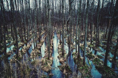Wild forest on the water.