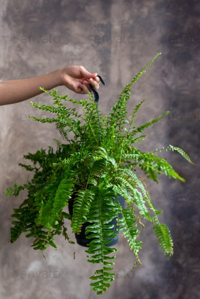 Woman holding fern plant