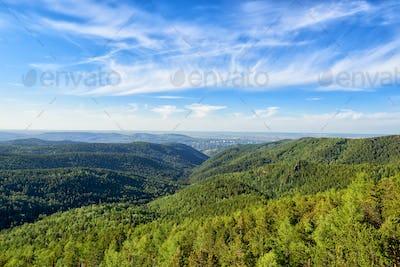 View of Siberian Taiga in June