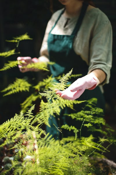 Close up woman hands in pink gloves caring about plants in greenhouse