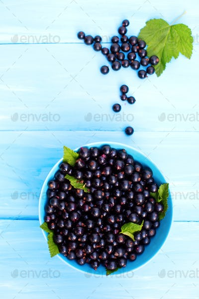 Berries of a black currant on a blue table
