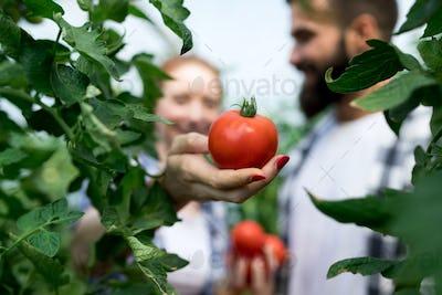Friendly team harvesting fresh vegetables from the greenhouse garden