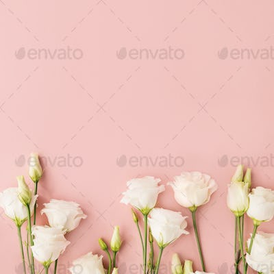 White flowers on pink background