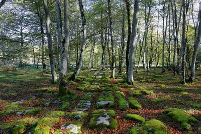 Limestone pavement surface in Monte Santiago nature forest in Spain.