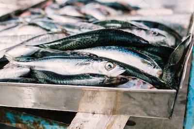 Raw anchovies at fish market