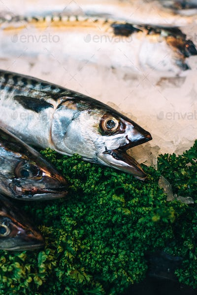 Mackerel on ice for sale