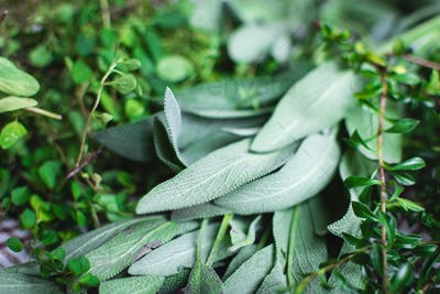 Freshly cut sage and other herbs