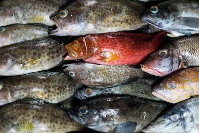 Fish on a fish market