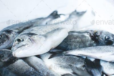 Shimmering fish at fish market