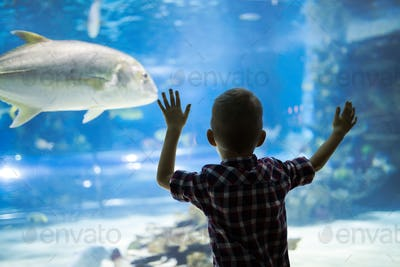 Cute boy watches fishes in aquarium