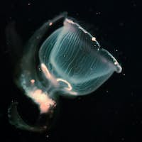 Close-up picture of beautiful jellyfish floating in ocean