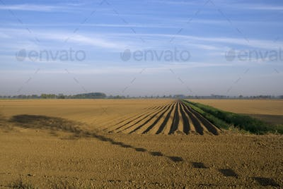 Barren field with tree shadow