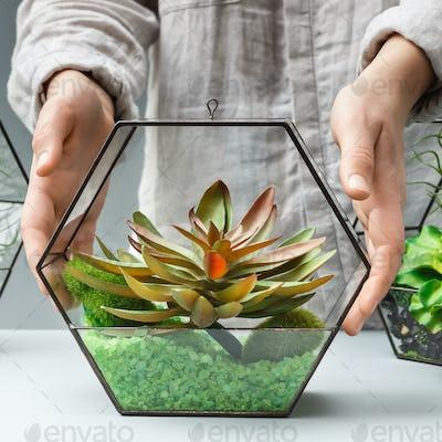 Woman showing succulent garden in glass florarium