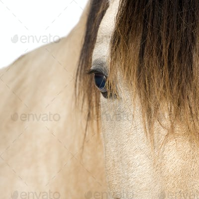 close-up on a Horse