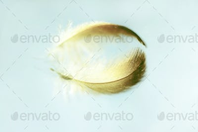 An amazing macro image of a feather on a mirror with a beautiful
