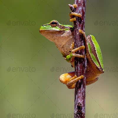 Friendly Tree frog