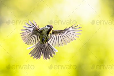 Bird in flight on bright green background