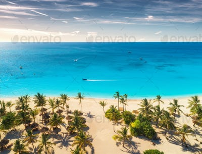 Aerial view of palm trees on the sandy beach at sunset