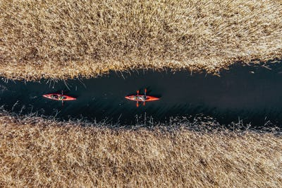 Group of people in kayaks among reeds on the autumn river