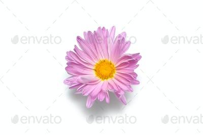 Macro flower bud isolated on white background