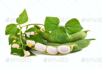 Green beans in pod