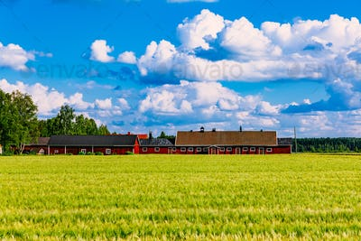 Red farm buildings and green field of summer wheat in Finland