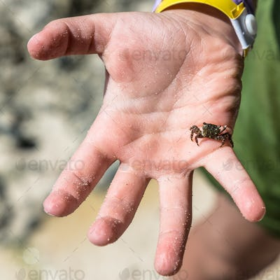 Tiny crab on a child hand