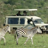 zebras passing in front of 4X4