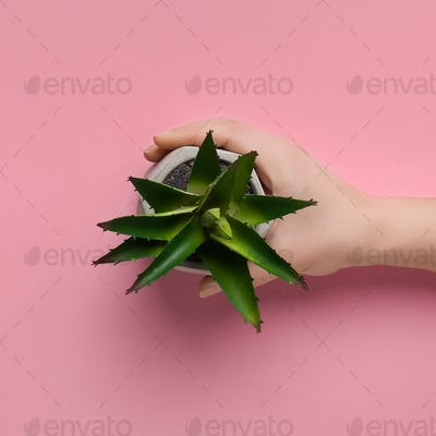 Woman holding aloe plant in pot, top view