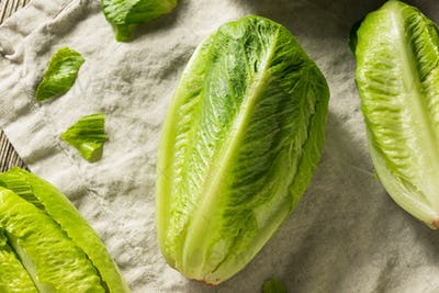 Organic Healthy Green Romaine Lettuce
