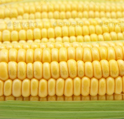 Isolated corn