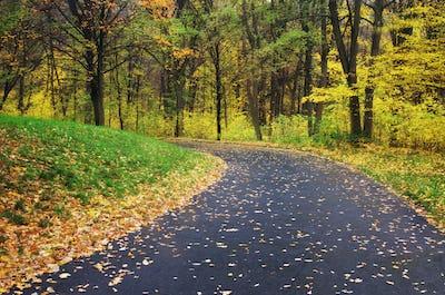 Road in autumn park. Nature composition.