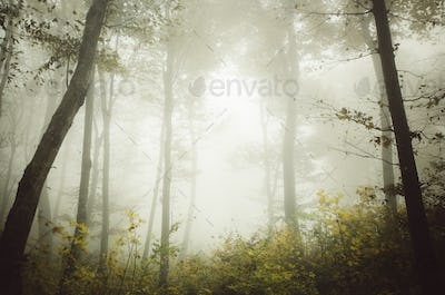 Enchanted fairy tale forest with fog