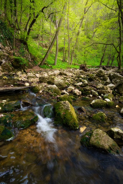 Flowing stream in the beautiful green forest