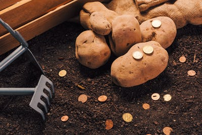 Making profit from organic farming of potato