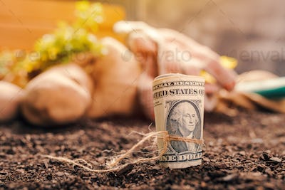 Making profit from organic farming of potato and parsley