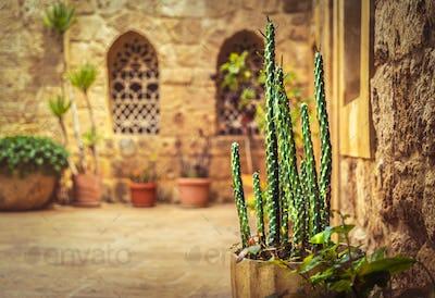 Beautiful yard of an ancient church