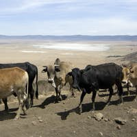 View on the Ngorongoro Crater