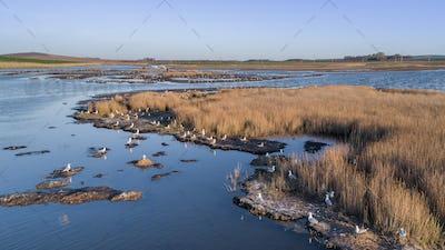 seagulls in Danube Delta, Romania