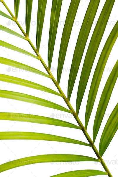 Close up of leaf stem of Palm