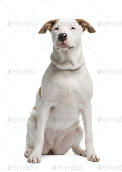 Mixed-Breed Dog between