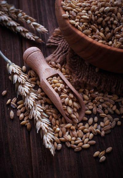 Wheat grain in wooden scoop