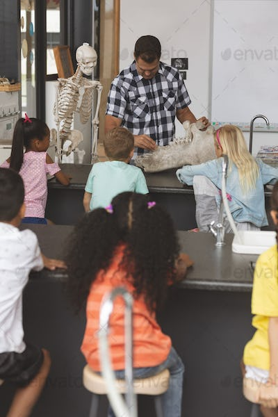 Front view of a teacher explaining at his pupils about human skeleton in classroom at school