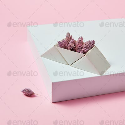 On the white box are pine cones in a cardboard triangular box on a pink background with space for