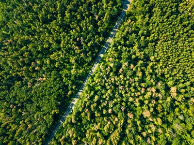 Aerial view of the road through the deciduous forest is a fine summer day. Natural background