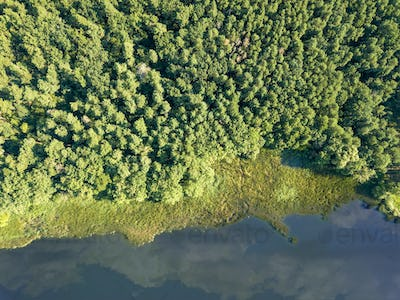 Beautiful aerial view of the drone on the river and the green forest on a sunny day. Natural